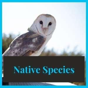 Native Species