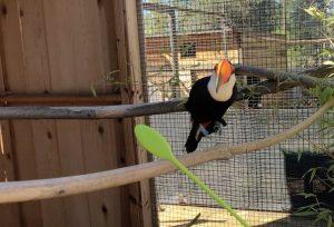 target training a toucan