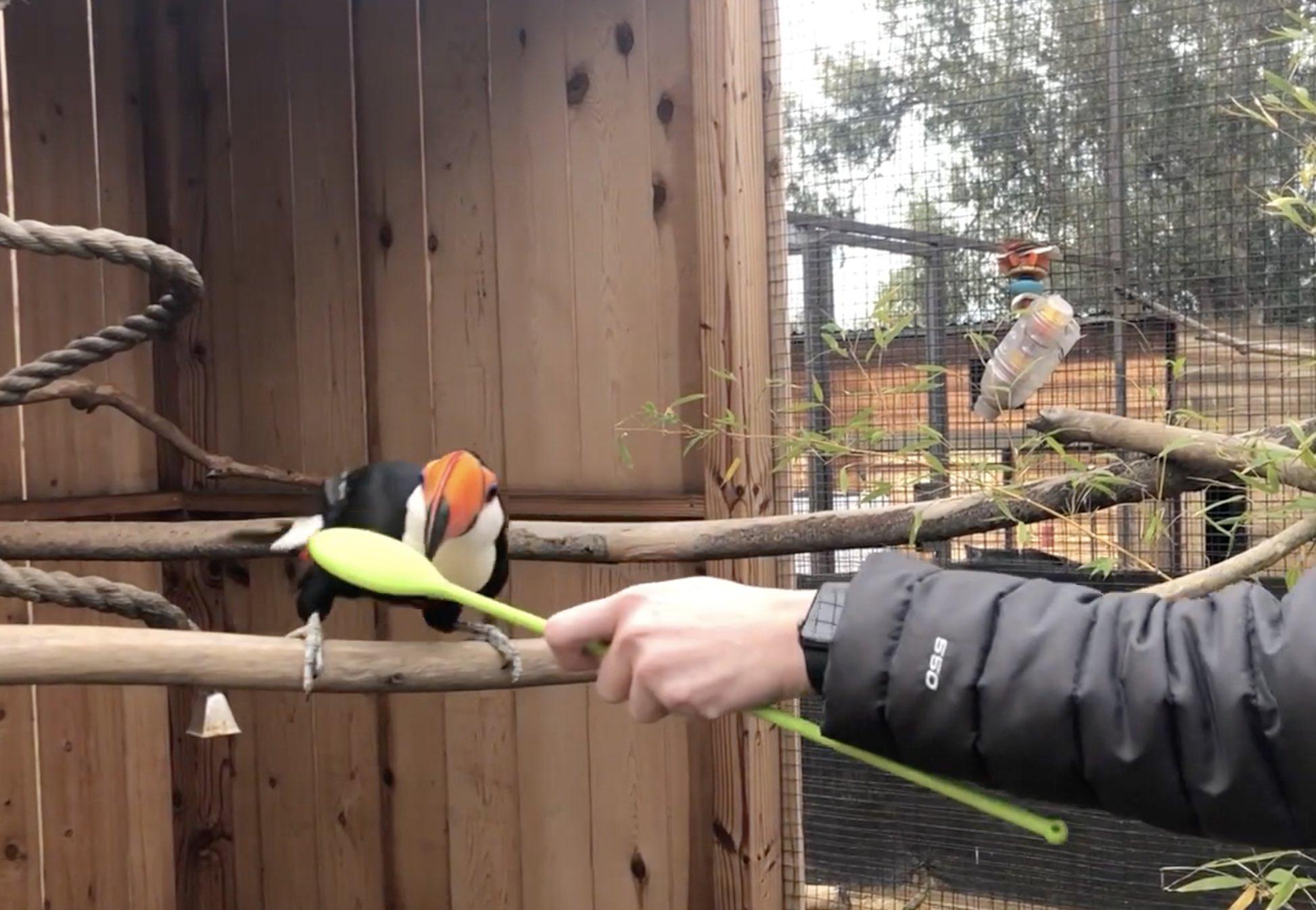target training toucan