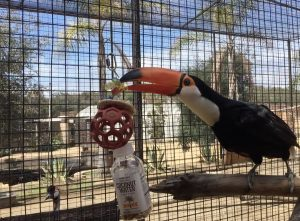 toys for toucans