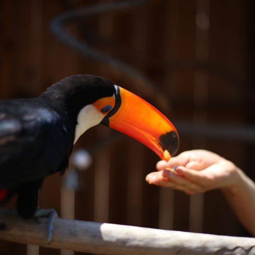 Exotic Bird Meet and Greet