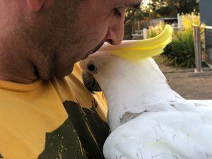 cockatoo snuggles