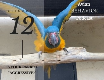 podcast episode 12 is your parrot aggressive