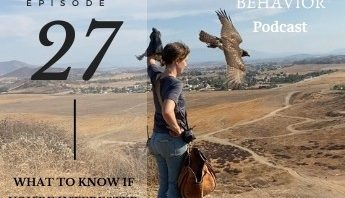 what to know if you're interested in falconry podcast episode 27
