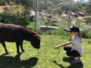 donkey and child