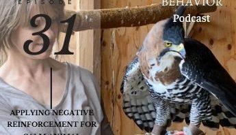 ornate hawk eagle negative reinforcement training