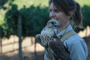 saker falcon lure flight