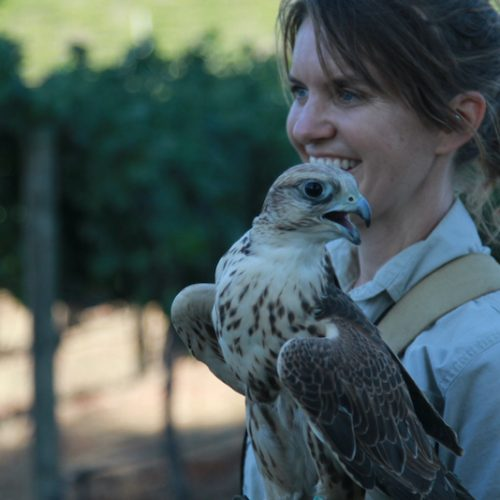How Understanding Nature Can Help You with Dogs and Babies and Dancing Barn Owls