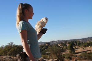 Barn owl flight training