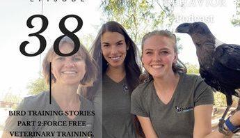 Hillary Hankey, Paige Davis, Katie Pnewski avian behavior lab training